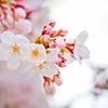 春の体調不良。動悸に効くのはやっぱりコレ【対策】