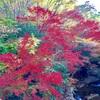 黒村の紅葉とキリンハウスのハンバーガー