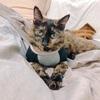 【気まま】猫のごはんの好き嫌いを比較。