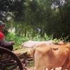 #アンコールワット個人ツアー(547) #10 月のアンコールワット(カンボジア)旅が面白くなる写真