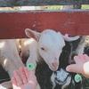 子連れ北海道道央(旭川⇒帯広)旅行3日目~牧場体験をし、富良野の食を楽しむ~
