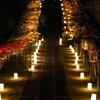 西方寺の「夜間観曼珠沙華会」(彼岸花ライトアップ)に立ち寄って来た。