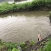 7/21やはり厳しい津屋川💧一応魚は釣れたが…