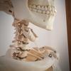 首、頚椎の骨の整体でリラックスが得られる。
