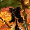 紅葉狩りに行ってきた--西山興隆寺