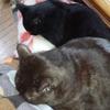 猫日記5 うちの猫への呼びかけ