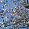 あっという間に春本番~大斎は復活への希望に満ちた期間