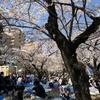 錦糸公園 桜まつり 2018年 (3)