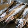 2019年8月20日 小浜漁港 お魚情報