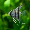 【初心者向け】熱帯魚飼育に必要な用品まとめ