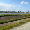 淀川に底なし沼な湿地で湿原的な沼地が出現した件【大阪市北区】