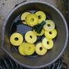 メダカの孵化ピーク と 痩せっぽちのアマガエル