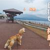 【わんこと旅】 桜島 ≪鹿児島県≫