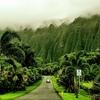 ホオマルヒアボタニカルガーデン ハワイの大自然を感じれる植物園