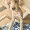 小豆島〜倉敷観光 犬と一緒に家族旅行!