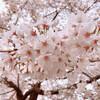 夜桜ウォーキング