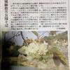 緑の桜 ギョイコウ