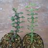 植物を種から育てる(その2)