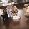 【ホットクック】メリットと使ってみた感想。料理が苦手な方にはオススメです!やせました!
