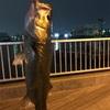 東京湾 船橋港 親水公園 シーバス バスパラ フリダシ ラパラ CD9 メジャークラフト 振り出し 電車釣行