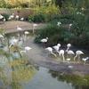 Bristol(ブリストル)おすすめスポット♡Bristol Zoo
