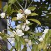 白い花で囲みます