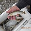 遊漁券、おとり販売について、釣果など