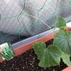 グリーンカーテン3年目 キュウリとトマトを追加