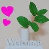 日常簡単に出来る癒しと開運方法~花・観葉植物