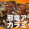 【オセロニア】邪竜アラニ・カラミッドを撃破せよ!!