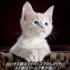 白いオス猫はマイペースでのんびりや、メス猫はクールで気が強い