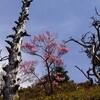 猟師KさんのPhotolife 墓場尾根の春