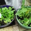 メダカ用家庭内ビオトープを雨がかかる場所に移動、そして、ペットが増えた...