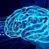 脳のパフォーマンスを高める脂質の基礎知識