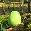 「立派な卵。」