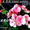 冬至/winter solstice/一陽来復/二十四節気