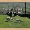 崖に向かって突進している羊の集団