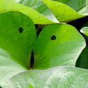 自然の息づかいを笑写するブログ