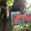 イヌシデは「犬四手」。シラカバは「白樺」。ソメイヨシノは「染井吉野」。クヌギは「櫟」。