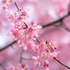 春本番!文京区の観光名所とグルメスポットのご紹介