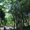 インナーチャイルドを癒すセッション〜心の庭に旅をする