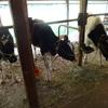 牛の放牧場つくり