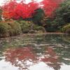 日光山輪王寺逍遥園の紅葉が見ごろ