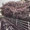 久しぶりの境川サイクリングロード 外勤先→常勤先へ