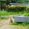 吉香公園の猫