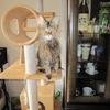 キジトラ猫 お風呂大作戦