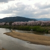京都背割の桜と「さくらであい館」オープン