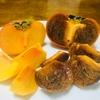 紀ノ川柿は真っ黒でとろあまの濃厚な柿だというはなし