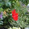 olympuspenepl8 夏の花 フリー素材