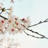 """""""始まりの春""""をサポートします"""